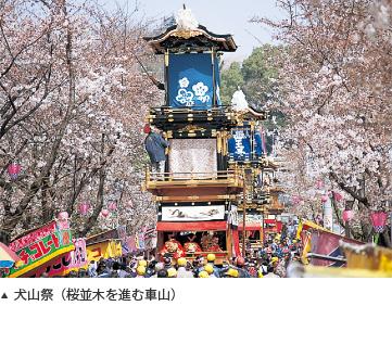 犬山祭(桜並木を進む車山)
